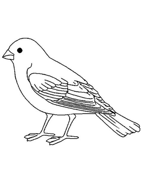 birds coloring pages birds free colouring pages