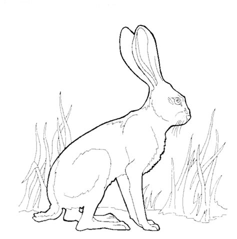 coloring pages jack rabbit canku ota coloring book page seven