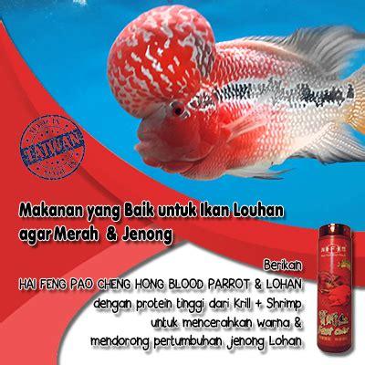 Pakan Ikan Louhan Supaya Merah makanan yang baik untuk ikan louhan agar merah jenong