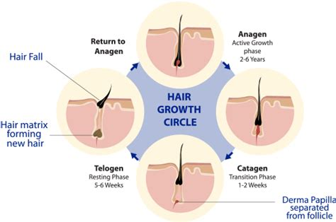 what cause hair loss all about hair loss what causes hair loss