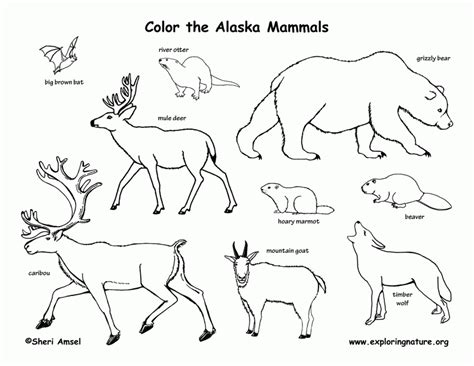 mammal pictures to print az coloring pages