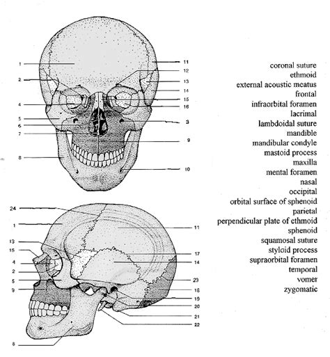 anatomy and physiology diagram quizzes anatomy quiz