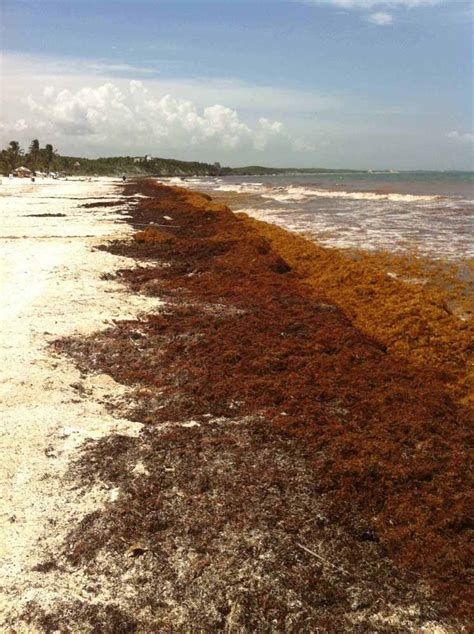 um where is belize a journey into the unknown books the journey of the sargassum ambergris caye belize