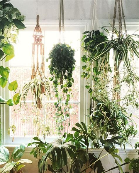 House Plant Hangers - 25 best ideas about indoor hanging plants on