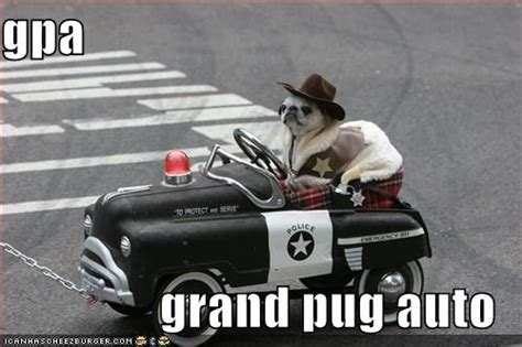 pug pictures with captions pin by rhiannon mcnulty on pugs
