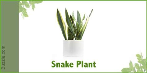 plants that don t need sunlight to grow dress up your home with these indoor plants that don t