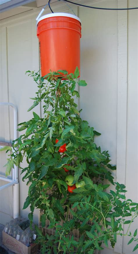 Tomato Hanging Planter by Image Tomato Garden