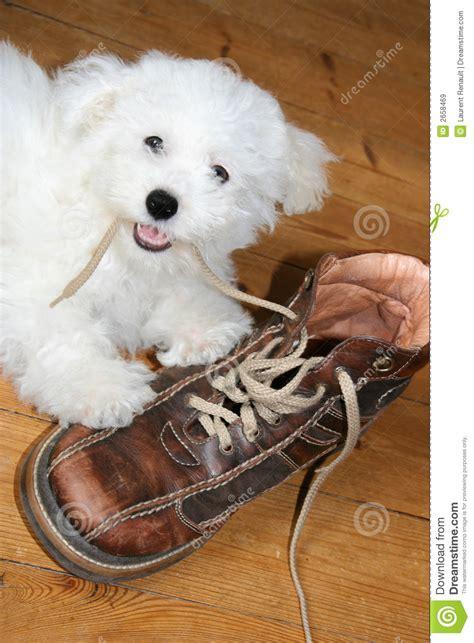perro travieso perrito travieso im 225 genes de archivo libres de regal 237 as