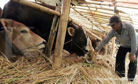 Tempat Pakan Ternak Sapi ternak sapi bandung pabrik pakan ternak jawa timur