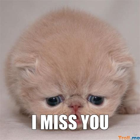 I Miss You Meme - i miss you meme 28 images i miss you memes gifs images