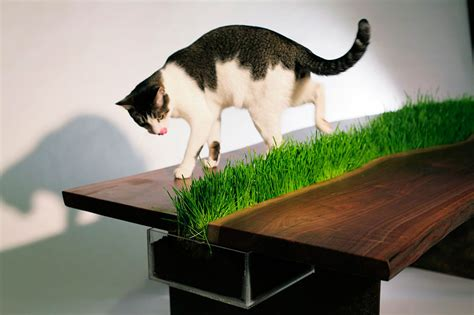 cat table 25 awesome furniture design ideas for cat lovers bored panda