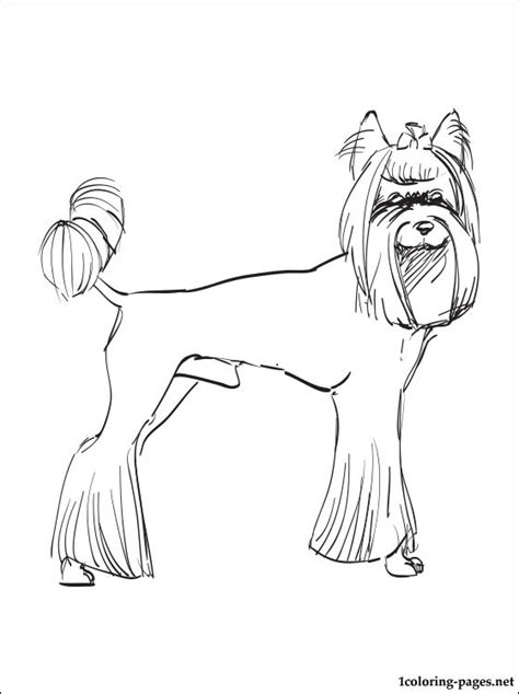 yorkie terrier coloring pages dog breeds picture