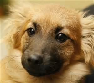 Dogs For Adoption Lucas County Dogs For Adoptions 11 28 Toledo Blade