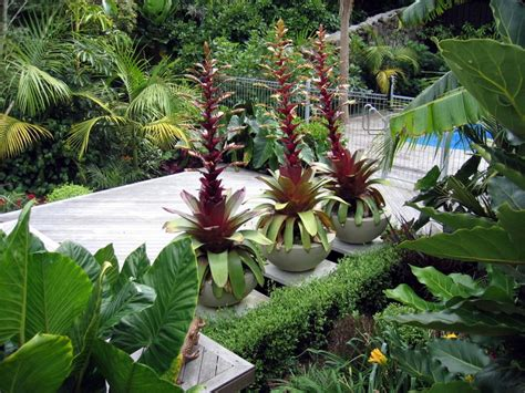 subtropical garden ideas subtropical garden design seed landscapes