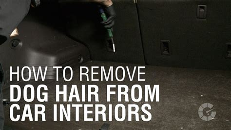 how to get dog hair out of car upholstery how to get dog hair out of car upholstery 28 images