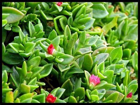flores imagenes que se mueven las plantas tambi 233 n se mueven