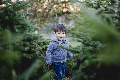 auf der suche nach dem weihnachtsbaum mummyandmini com