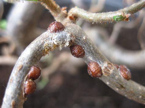 ungebetene plagegeister schaedlinge  pflanzen