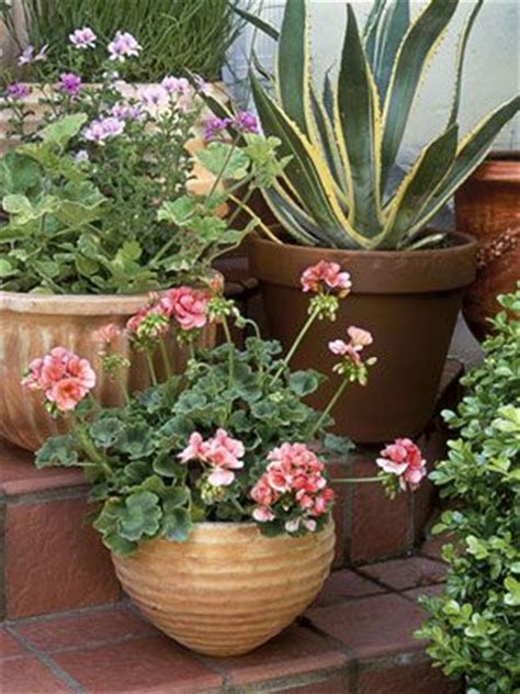 78 best ideas about outdoor potted plants on