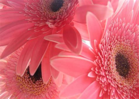 imagenes para fondos de pantalla flores fondo de pantalla para celular fondos de pantalla para