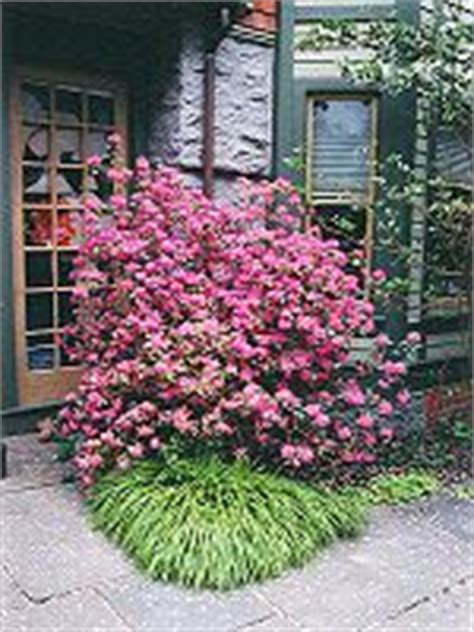 plants for north side of house shade plants on pinterest shade plants perennials and plants