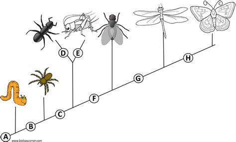 Cladogram Worksheet Answers Key Biology