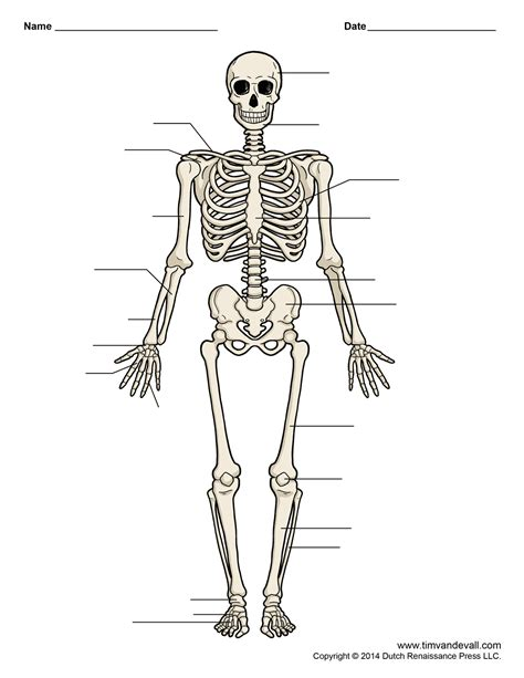 printable label the skeleton printable human skeleton diagram