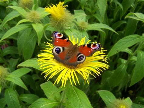 flower food without without pollinators our flowers food supply a stinging loss