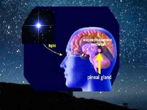 imagenes 3d tercer ojo la gl 225 ndula pineal pituitaria y el tercer ojo mensaje