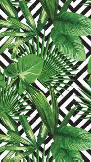 Rock Wall In Bedroom Best 25 Palm Fronds Ideas On Pinterest Palm Green