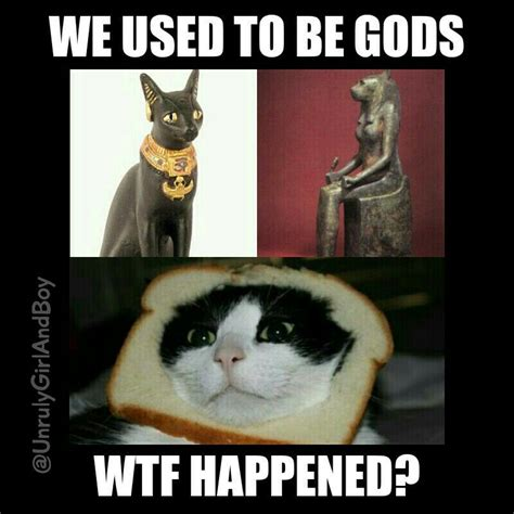 Egyptian Memes - cats gods meme egyptian cats and other animals