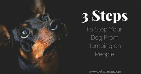 Stop From Jumping On by A 3 Step Guide To Stop Your From Jumping On