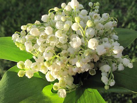Muguet Fleurs Images by Fonds D Ecran Muguet De Mai Blanc Fleurs T 233 L 233 Charger Photo