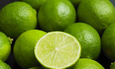 Comment Avoir Des Citrons Sur Un Citronnier by Faire Germer Des Ppins De Citron Ppins De Citron
