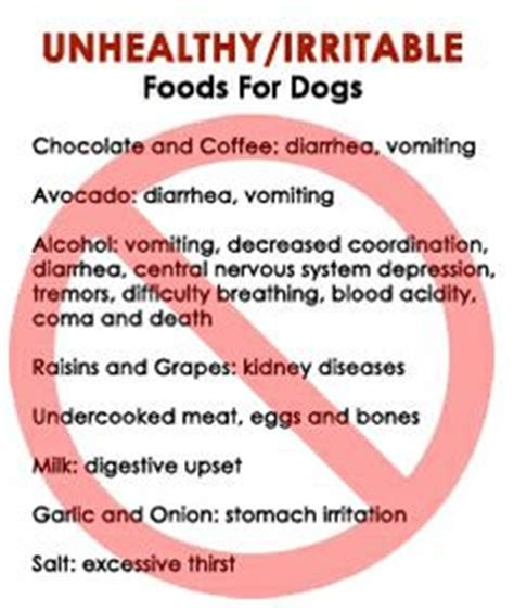 is cat food bad for dogs 1000 images about health tips for dogs and cats on pets cat health and