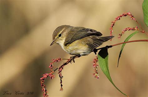 alimentazione uccelli lui piccolo in alimentazione juzaphoto