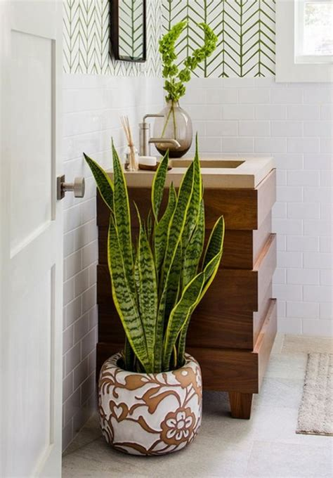 top  biljaka koje ce voljeti vasu kupaonicu  images