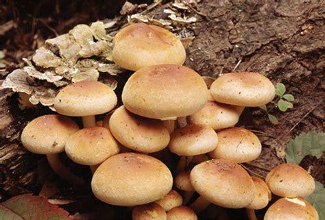 exle of fungi assignment 2