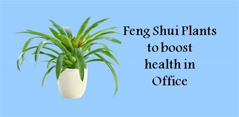 feng shui health 5 feng shui plants that will boost your productivity at