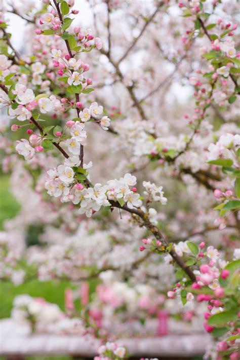 crabapple inspiration shoot floret flowers