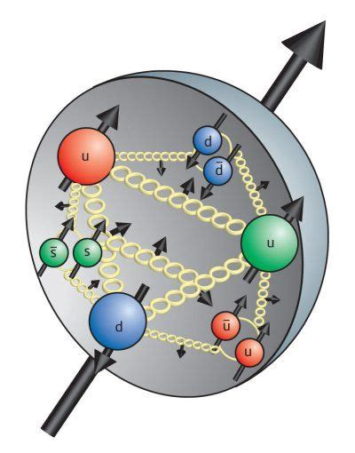 Proton Quarks by Proton Showing Quarks And Gluons
