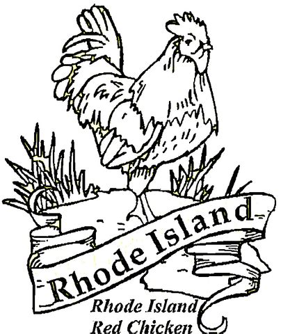 coloring pages of rhode island red chicken of rhode island coloring page free printable