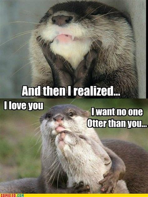 Otter Meme - 1000 images about my otter half on pinterest