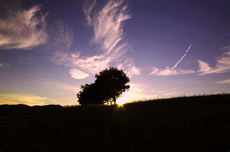 l albero a cui tendevi fotografia paesaggio l albero a cui tendevi la