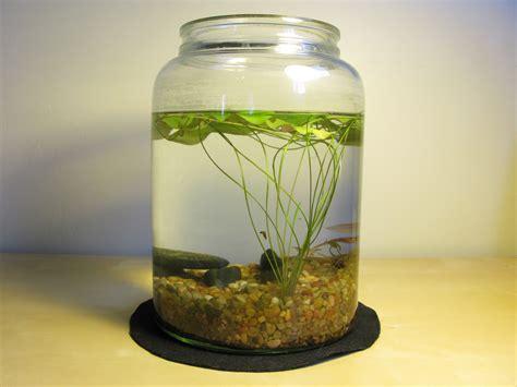 diy indoor pond indoor water garden water plants indoor