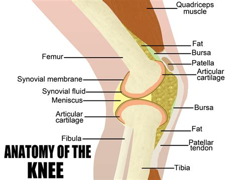 parts of knee diagram knee diagrams to print diagram site