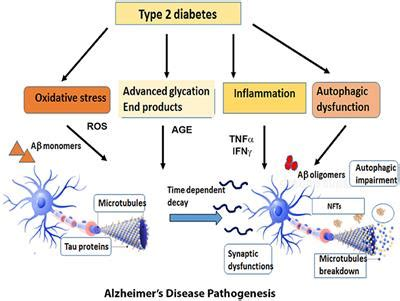 frontiers alzheimers disease  type  diabetes  critical assessment   shared