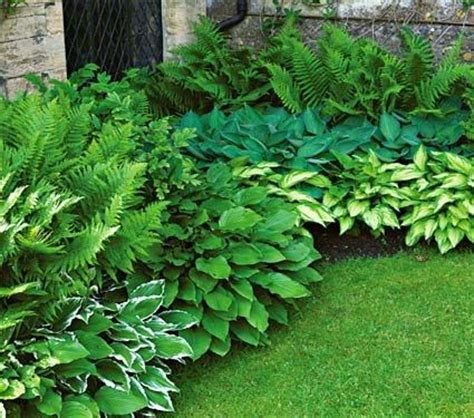 best plants for shade with lights 10 best shade garden plants