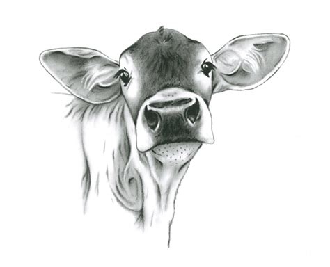 farmhouse art cow art charcoal drawing print