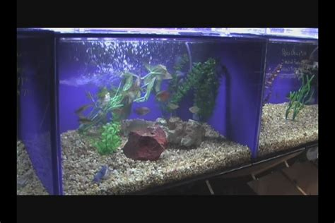 Aquarium Decoration Ideas Freshwater Gallery For Gt Freshwater Aquarium Ideas Decor